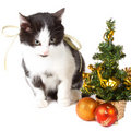 Free Cat And Christmas Decorations Stock Photography - 17252662