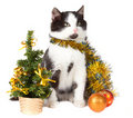 Free Kitten And Christmas Decorations Royalty Free Stock Photo - 17252705