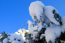 Free Snow Covered Tree Royalty Free Stock Photos - 17251528