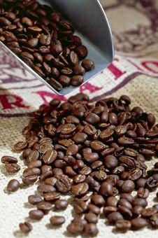 Free Coffee Beans Stock Photos - 17252013