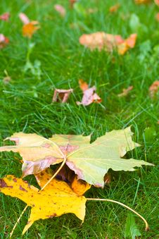 Free Autumn Leaves Royalty Free Stock Photos - 17252378