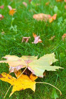 Free Autumn Leaves Royalty Free Stock Photos - 17252378
