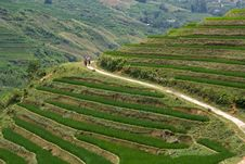 Free Sapa Highlands Trail Royalty Free Stock Images - 17252549