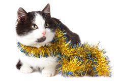 Free Cat With Garland Royalty Free Stock Images - 17252819