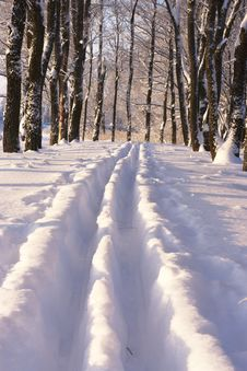 Trails In The Snow In The Park Stock Image