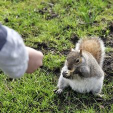 Free Squirral In Park Royalty Free Stock Photo - 17253845