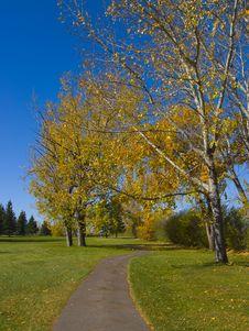 Free Autumn Leaves Stock Photo - 17254010