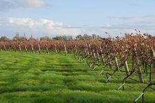 Free Vineyard S Edge Stock Image - 17254371