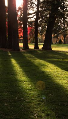 Free Long Shadows In The Park Stock Photos - 17254983