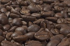Free Coffee Beans Isolated Royalty Free Stock Photography - 17255667