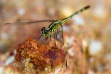 Free Dragonfly Stock Photo - 17256780