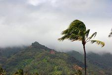 Free Tropical Plantation Hawaii Stock Image - 17257071
