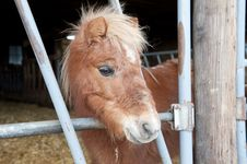 Free Mini Pony Royalty Free Stock Image - 17257366