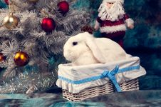 Christmas White Rabbit In The Basket Stock Photo