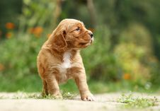 Free Puppy Looking Stock Photography - 17259592