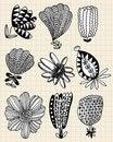 Free Hand Draw Flower Stock Photos - 17261513