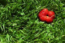 Free Strawberry Feel Stock Photo - 17262630