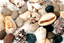 Sea Cockleshells And Round Pebbles Stock Image