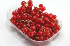 Free Currants Stock Image - 17264201