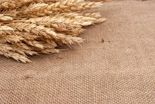 Free Wheat Ears Royalty Free Stock Photos - 17264628