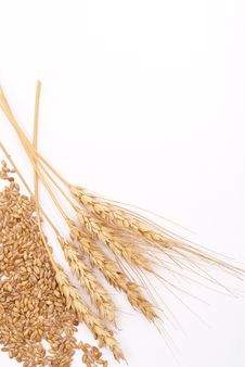 Free Wheat Ears Royalty Free Stock Photography - 17264657