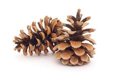 Free Two Spruce Cones Royalty Free Stock Image - 17264696