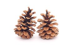 Free Two Spruce Cones Royalty Free Stock Images - 17264739