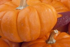 Free Pumpkins Royalty Free Stock Images - 17264809