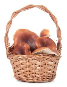 Basket With Mushrooms On A White Background Stock Image