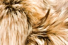 Free Furs Background Stock Photo - 17266210