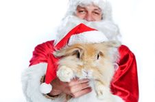Photo Of Happy Santa Claus Holding A Cute Rabbit Stock Photo