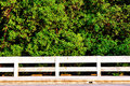 Free Mangrove Forest Stock Image - 17275931