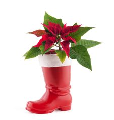 Free Christmas Decoration Poinsettia Stock Photos - 17273533
