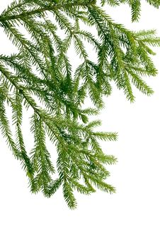 Free Green Branch Of  Fir-tree Stock Images - 17275494