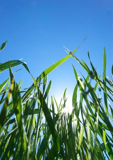 Free Grass And Sky Stock Photo - 17275560