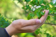 Woman Hand And Flower Stock Photography