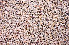 Free Lotus Seed Stock Image - 17275821