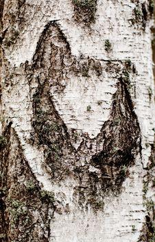 Birch Background Stock Image