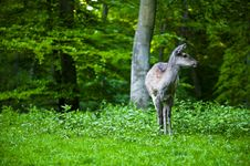 A Deer In The Woods Stock Images