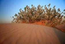 Free Shrubs In The Sandy Desert. Stock Photo - 17277310