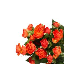 Free Roses Royalty Free Stock Images - 17277499