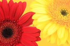Free Two Flowers Stock Photos - 17278043
