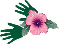 Free Hibiscus Royalty Free Stock Images - 17278829