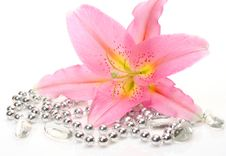 Free Pink Lily Stock Photography - 17279452