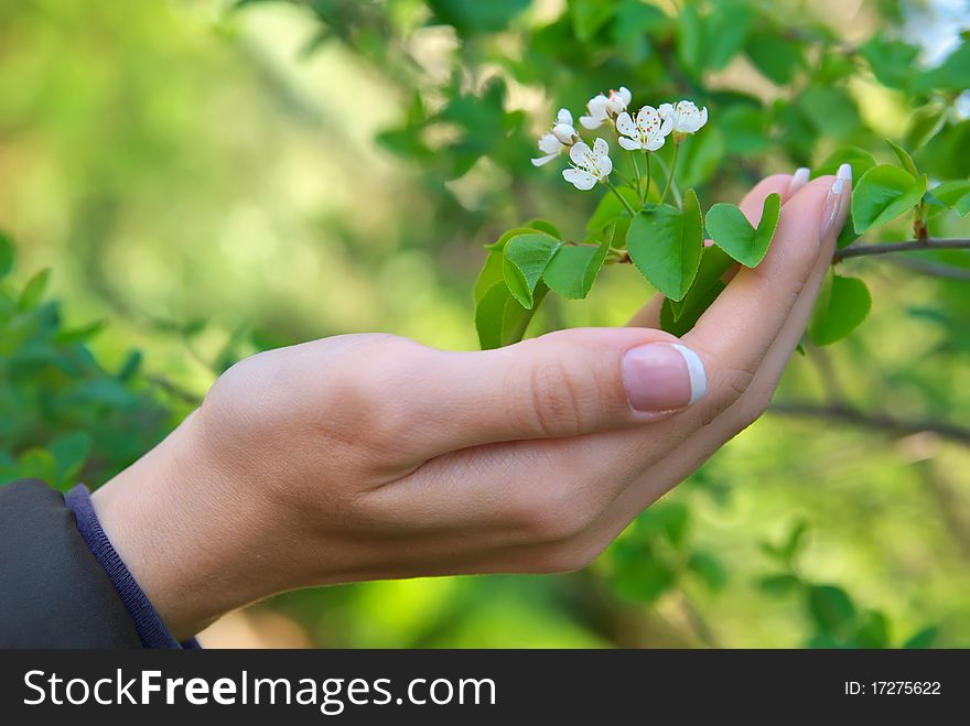 Woman hand and flower