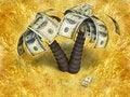 Free Money Tree Stock Image - 17281191