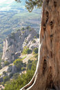 Free Pine On The Cliff Stock Photos - 17282563