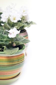 Free Potted Flowers In A Row Royalty Free Stock Image - 17280016