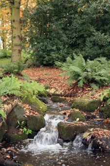 Free Woodland Stream Stock Photo - 17280360