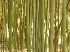 Free Background Of Bamboo Royalty Free Stock Images - 17282379